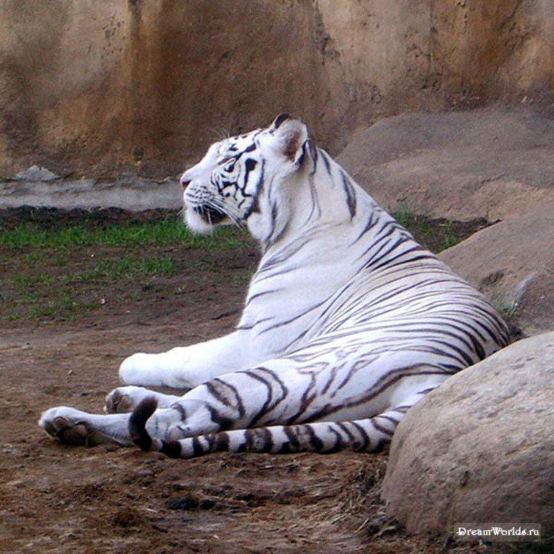 В московском зоопарке, снималось через мутное толстое стекло с большого расстояния без штатива при не особо хорошем...
