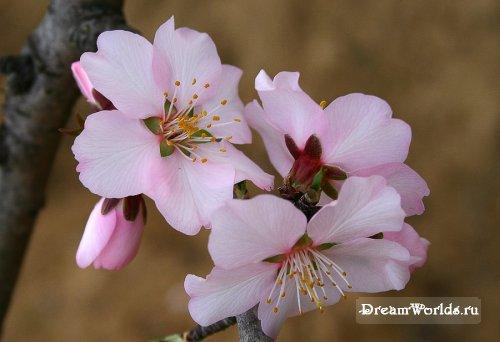 сакура, сакура ну что, будем лечицца красотой - уж она-то настоящая, без дураков.