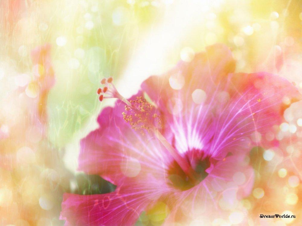 Цветы для наташи картинки 2