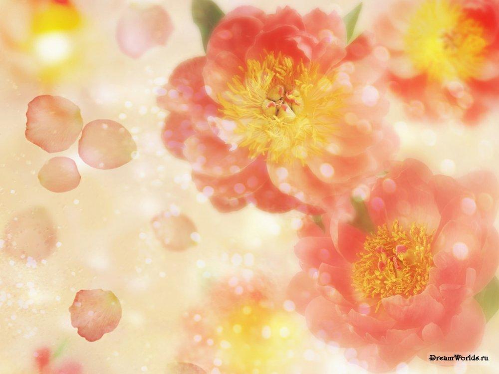 Картинки фон цветы 6