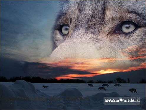 Волки одинокие картинки 6