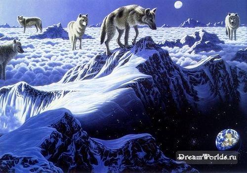 Волки-дикие и свободные (часть 3)