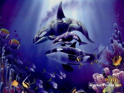 Дельфины игра - f1
