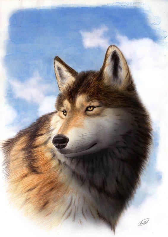 (портрет старого волка).
