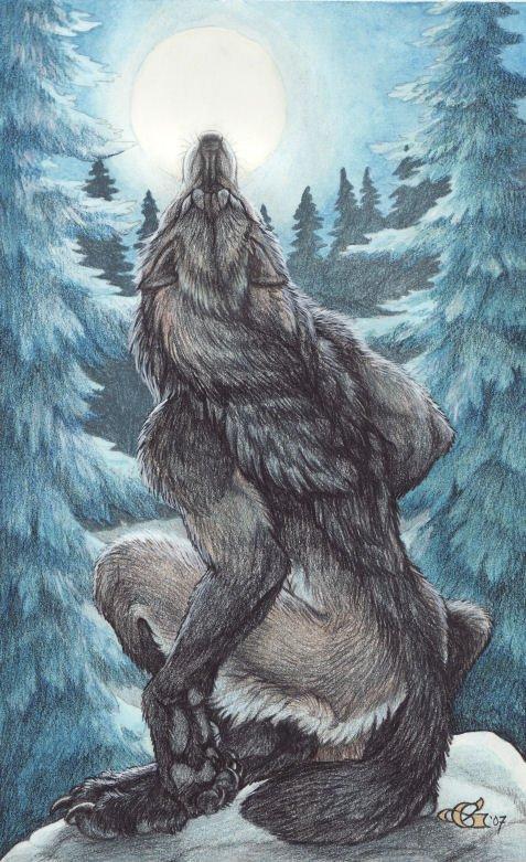 Картинки фурри волки любовь волка - 0