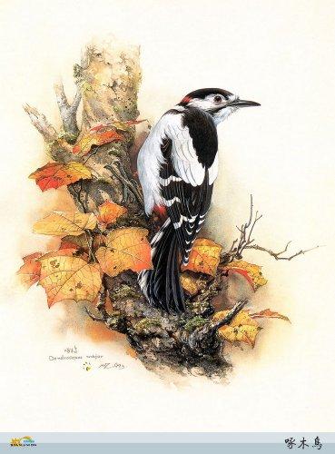 Затейливая живопись Zeng Xiao Lian. Птицы