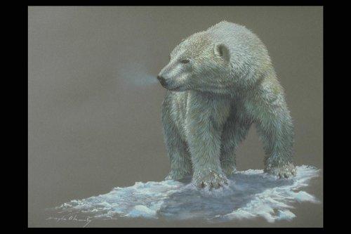 Медведь Изображение.