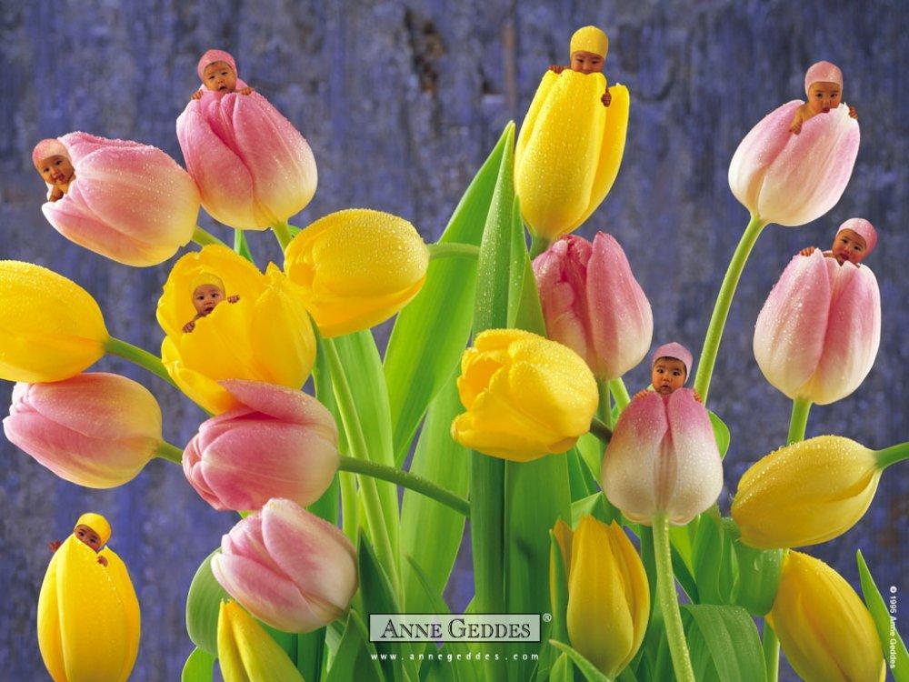 Красивые цветы для детей картинки 4
