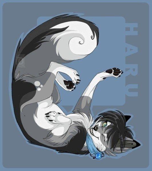 Клыки, когти, скорость, сила, хитрость (когда волк).  Катана, несколько сюрикенов и кунаев, кинжал (когда человек).
