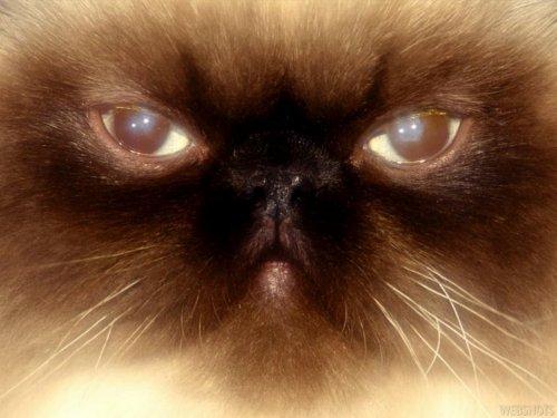 Легенды и мифы о кошках