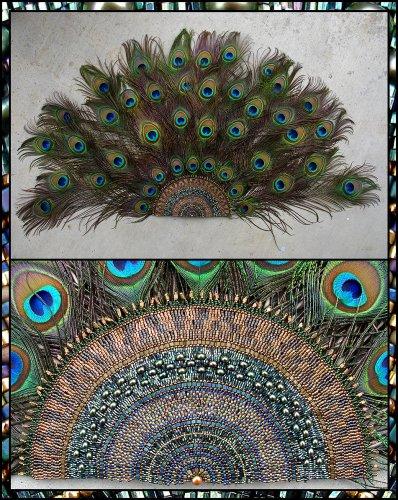 С детства я относилась к павлиньим перьям как к чему-то волшебному.  Мне казалось, что перо Жар - Птицы из сказки...