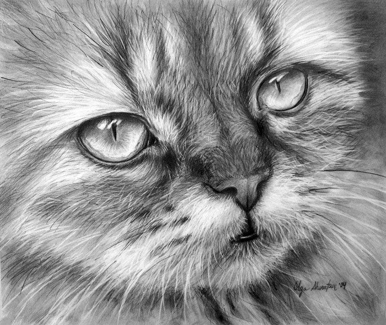 Спящие котята рисунки карандашом