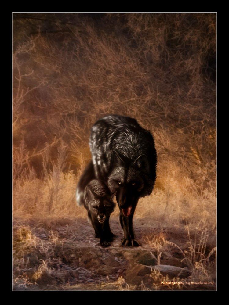 Волки одинокие фото 5