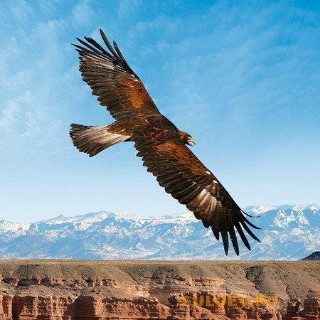 Когда птица расправляет крылья…