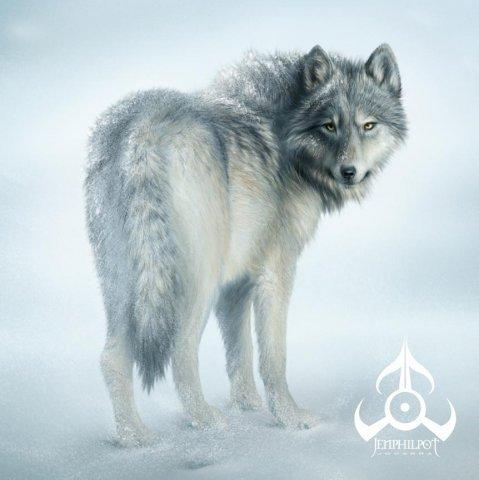 Волки волки и еще раз волки