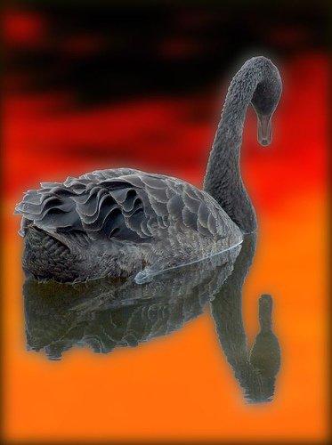 Житель качканара сделал лебедей для