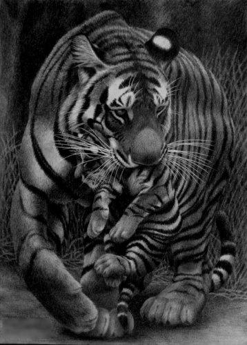 "Схема вышивки  ""Тигрица и тигрёнок "" ."