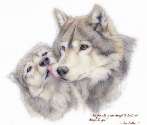 Ты попал на свадьбу волчицы blue и волка из тьмы))) .