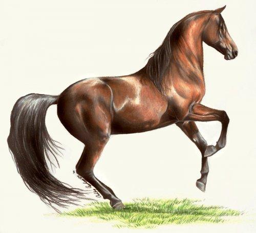 На первый взгляд кажется обычной лошадью, но это не так.  Алисия становится невидимой в сумерках, поэтому Оливер...