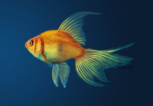 http://dreamworlds.ru/uploads/posts/2009-06/thumbs/1245050732_gold_fish_by_lobieg.jpg
