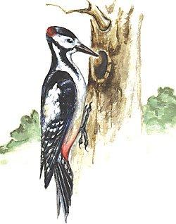 Да не на ветку, как все птицы, а прямо на ствол, как.  Летит дятел, несёт в...