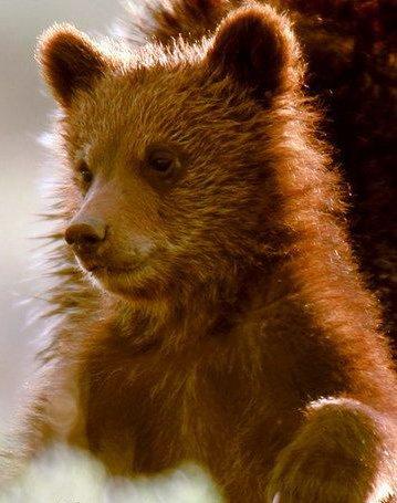 "У  ""медведей "" еще будет шанс перехватить инициативу в феврале."