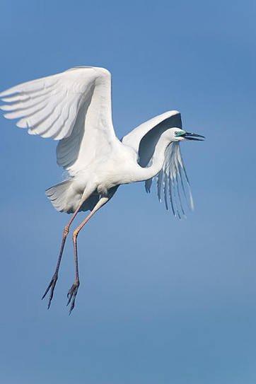 Класс птицы - Зимующие птицы России Птицы возникли в