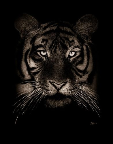 Вышивка крестом тигры схемы