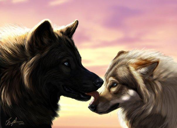 Ты ещё одинок(а). Никак не можешь найти волка или лиса своей мечты.