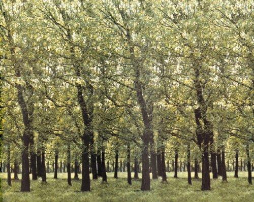 Стерео картинки, Стереограммы, Оптические иллюзии - Птицы в лесу.