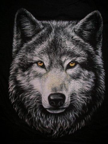 Наклейка автомобильная Волк.