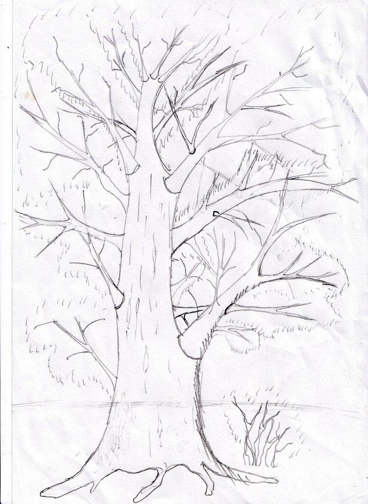 Схема как рисовать дерево