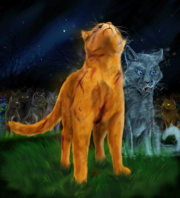 Коты воители картинки самые красивые - baa6