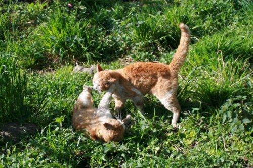 коты воители знакомство с грозовым племенем