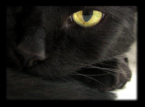 анимированные аватарки кошки: