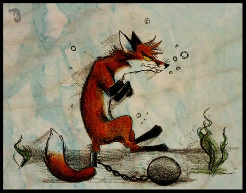 изображение лисы: