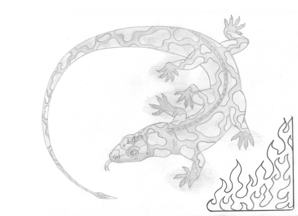 http://dreamworlds.ru/uploads/posts/2010-06/1277647168_4.-salamandra.jpg