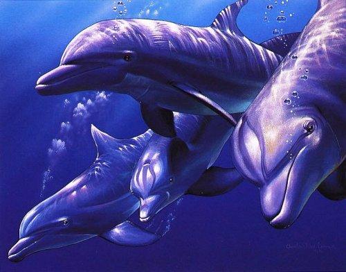 Легенда о розовом дельфине