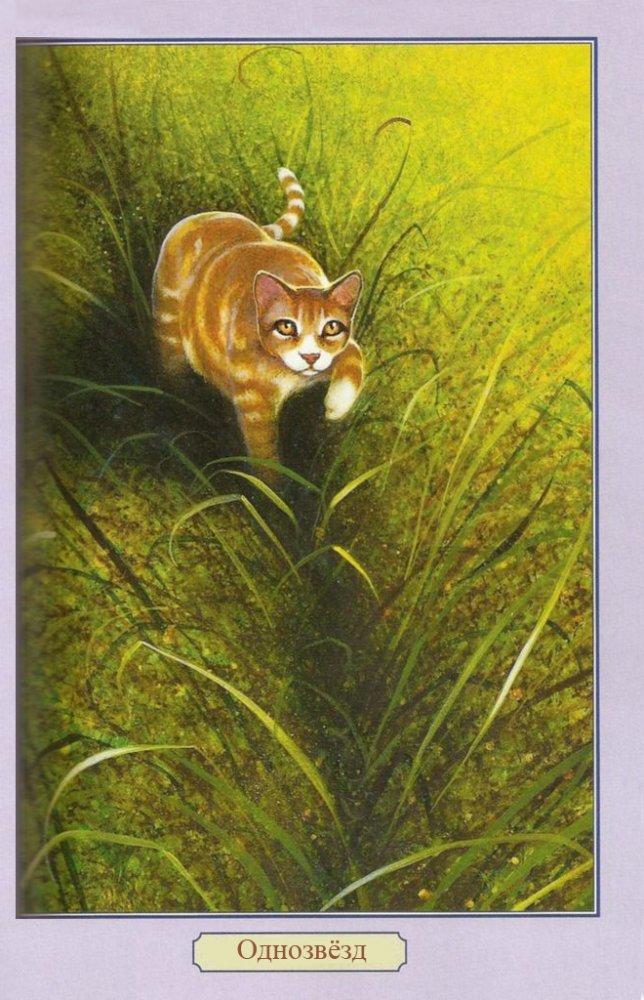 Коты воители огнезвезд фото - b0eb