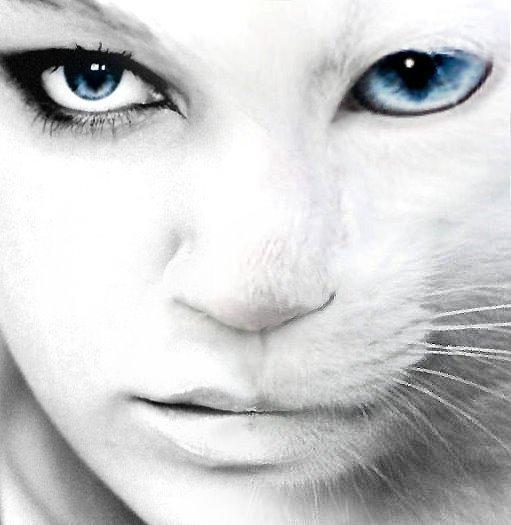 анкета волшебной кошки.  Ответ на вопрос 1: Кошка.  Опрос.