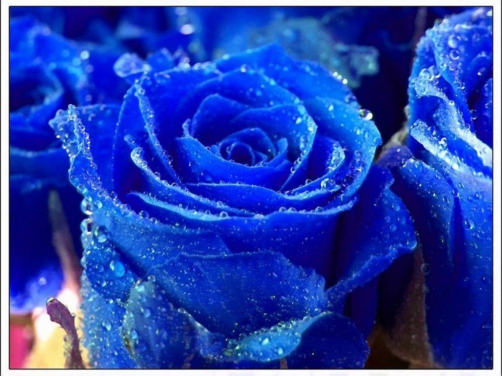Картинки синих цветов 7