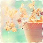 http://dreamworlds.ru/uploads/posts/2010-10/1287762868_64589877_osen82_150.png