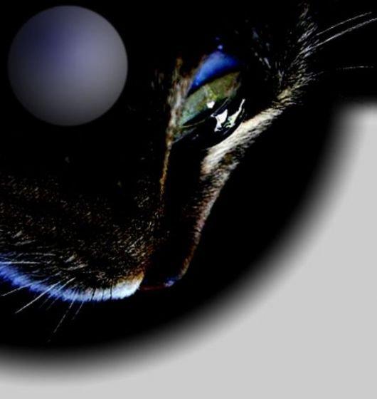 колыбельная для кошки песня