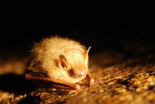 Летучие мыши: история изгнания
