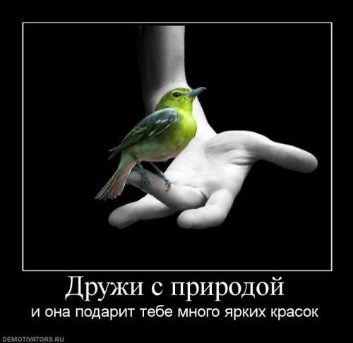 Список обои Птицы - Животные фото.
