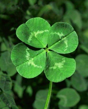 1296910647_4-leaf-clover.jpg