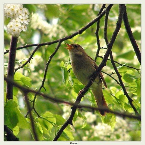 Стих о весне или Проза жизни.