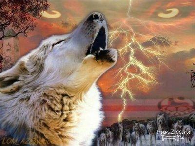 Белый Волк, Димка с днем рождения.  С Днем Рожденья поздравляю, Глупой радости желаю, Неожиданных звоночков...