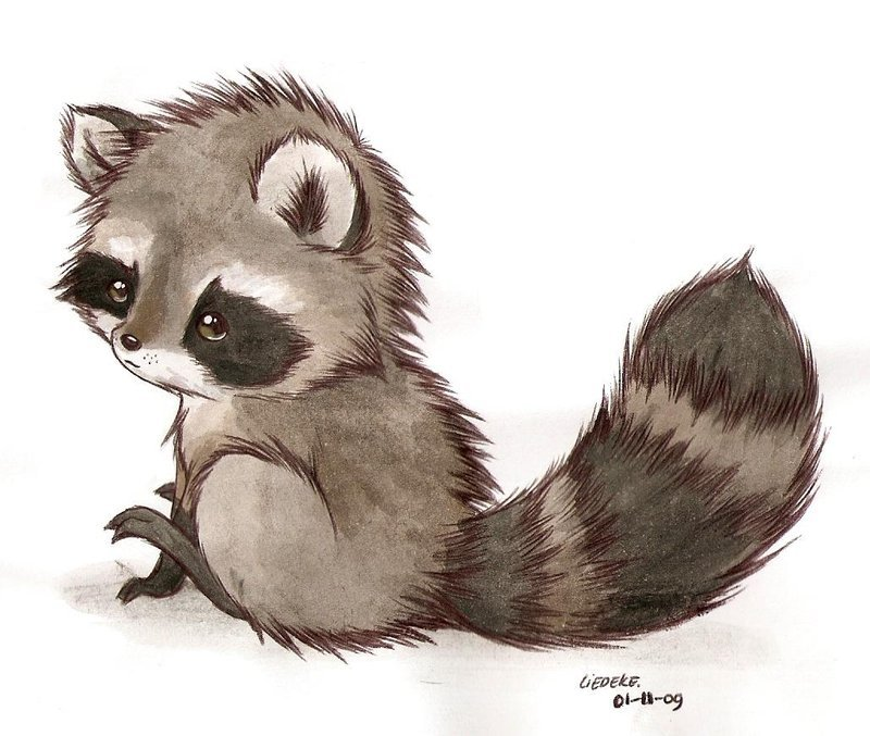 1316358335_it__s_a_racoon_by_kitsunebaka91-d2cq0s3.jpg
