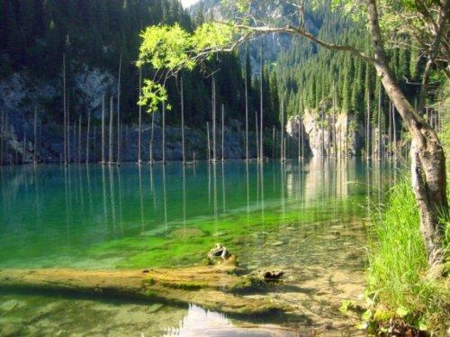 Необычное рядом. Затонувшие леса